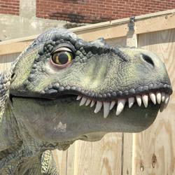 Juvenile T-Rex #2
